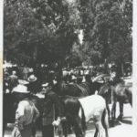 Feria de Ganado Villa de Fuente Álamo: un reconocimiento a la historia y trabajo de nuestros ganaderos